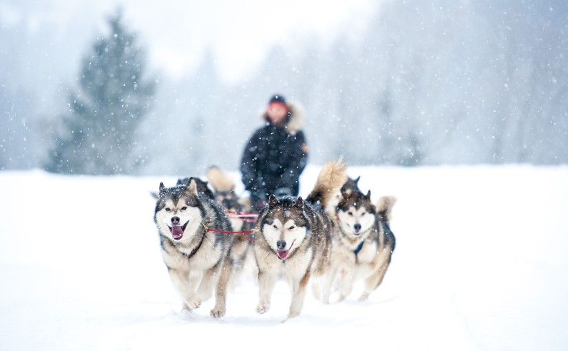 I know the economy is going to be fine. Because of dog sledding.
