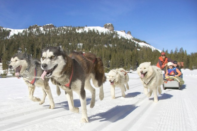 Heavenly-Mountain-Dog-Sledding