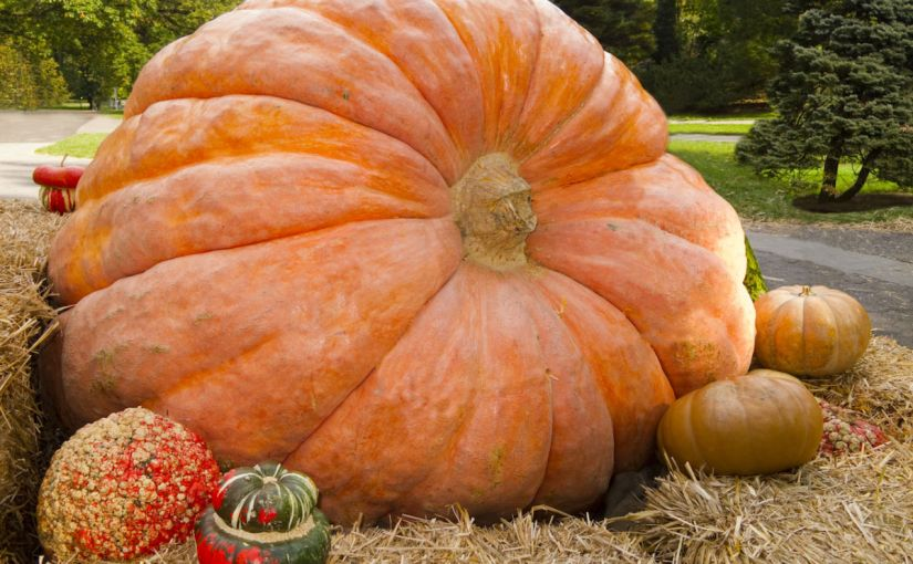 The best way to grow your own business, or a giantpumpkin.